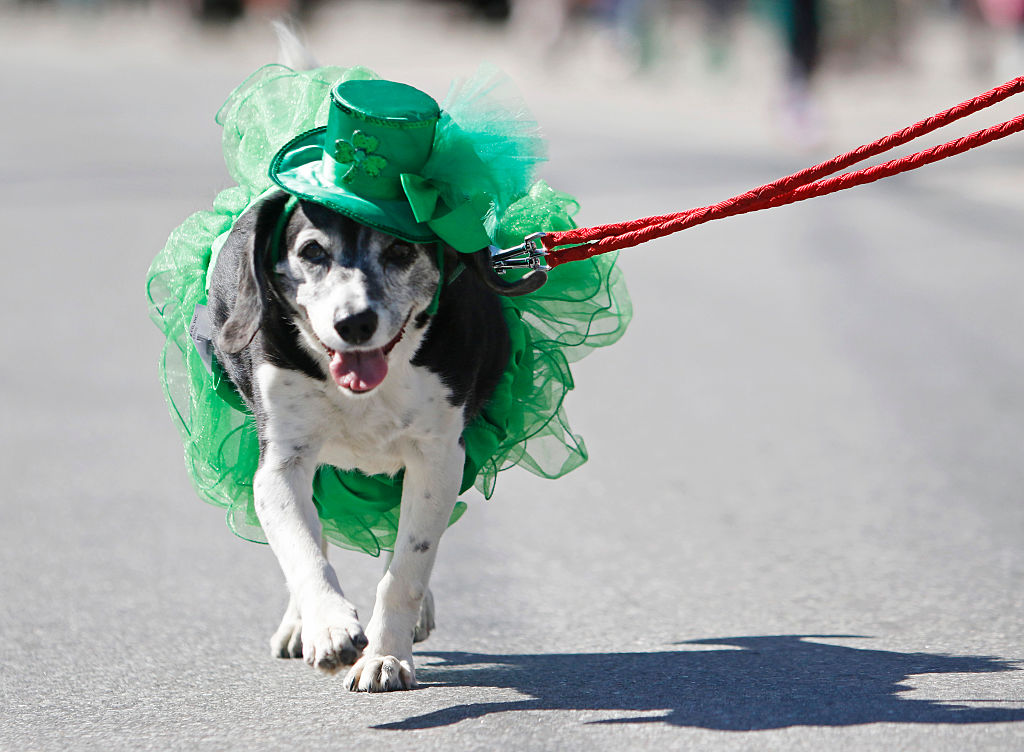 mona the dog st patricks day parade