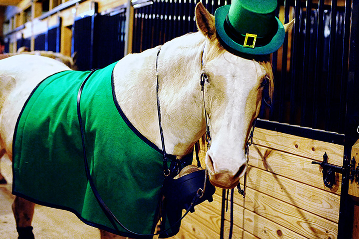 holiday ready horse st patricks day