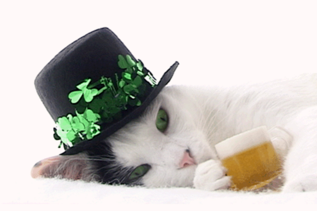 one too many cat st patricks day