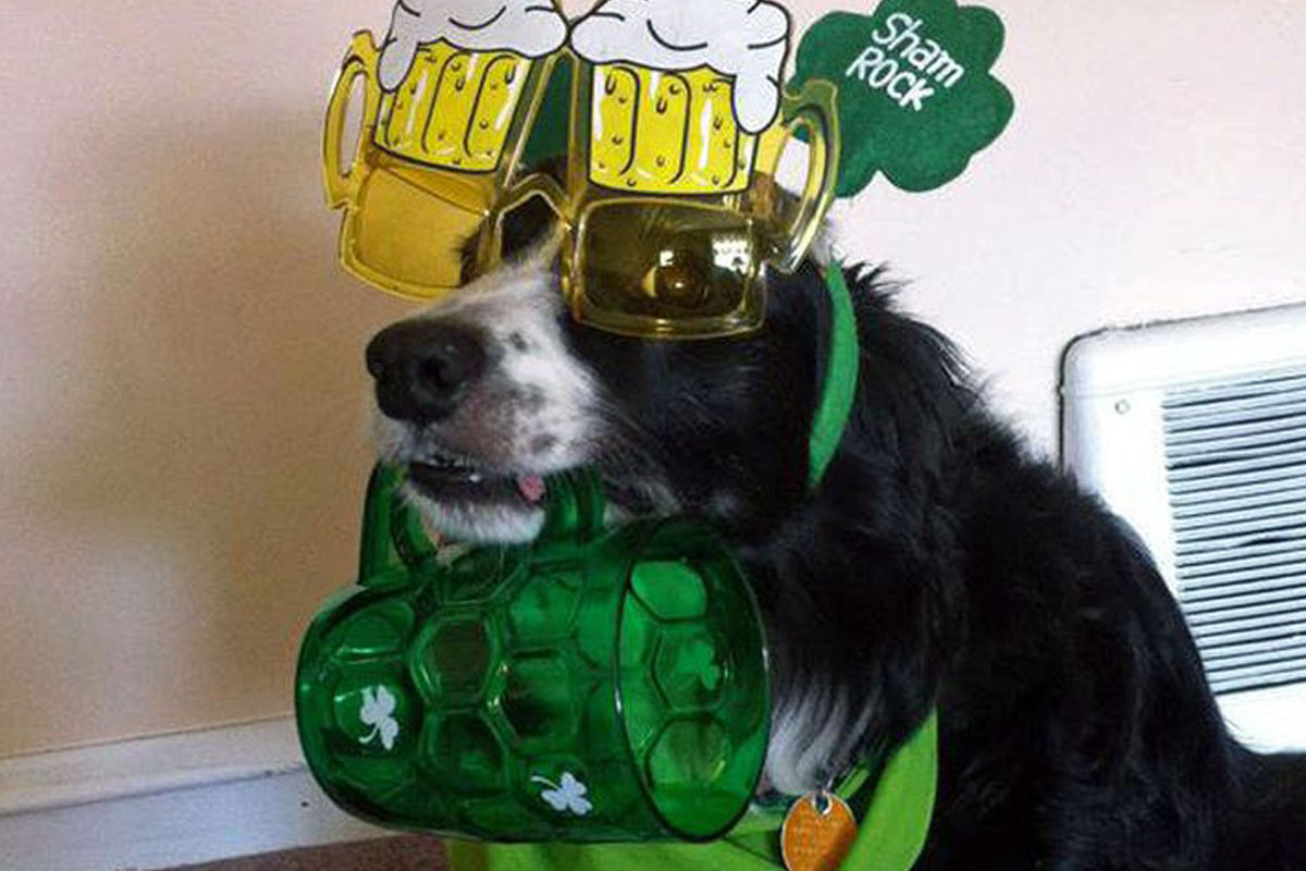 party dog beer st patricks day