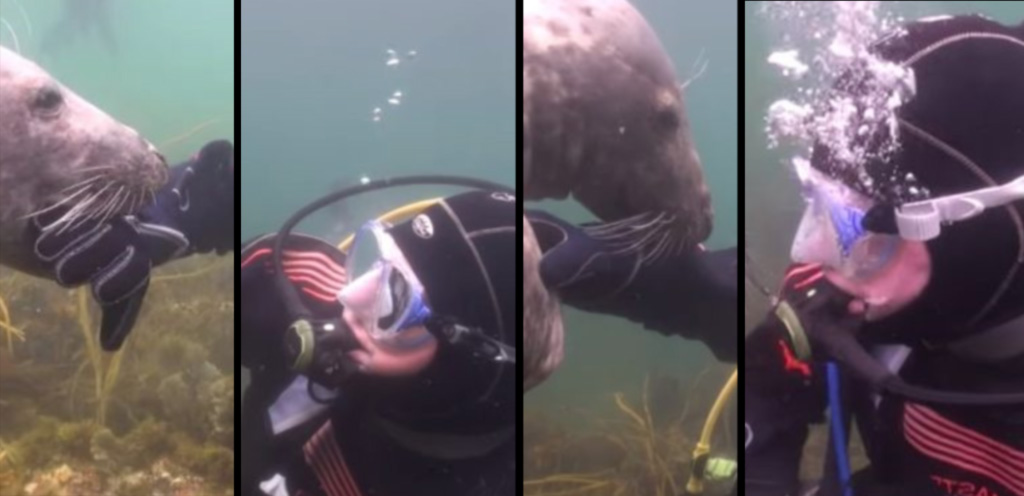 scuba-seal-encounter-1