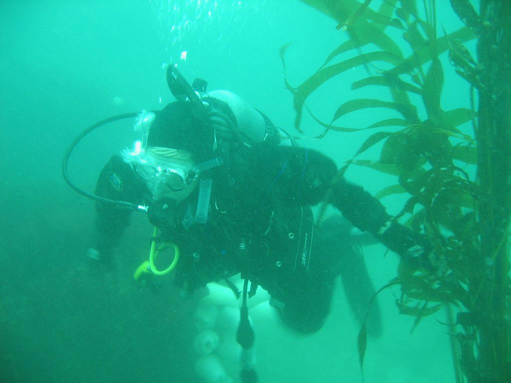 scuba-seal-encounter-6