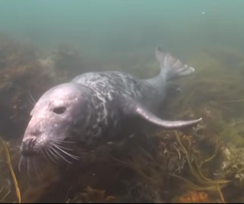 scuba-seal-encounter-8