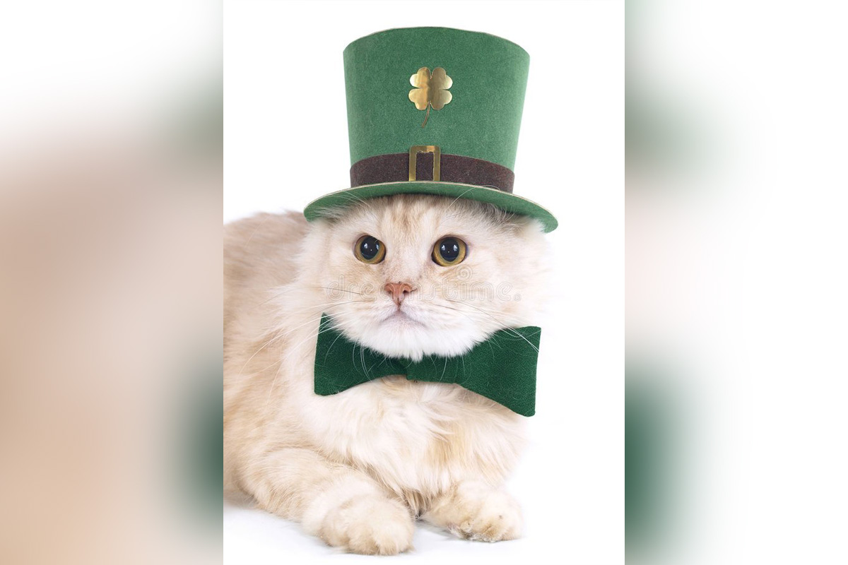super festive cat st patricks day leprechaun