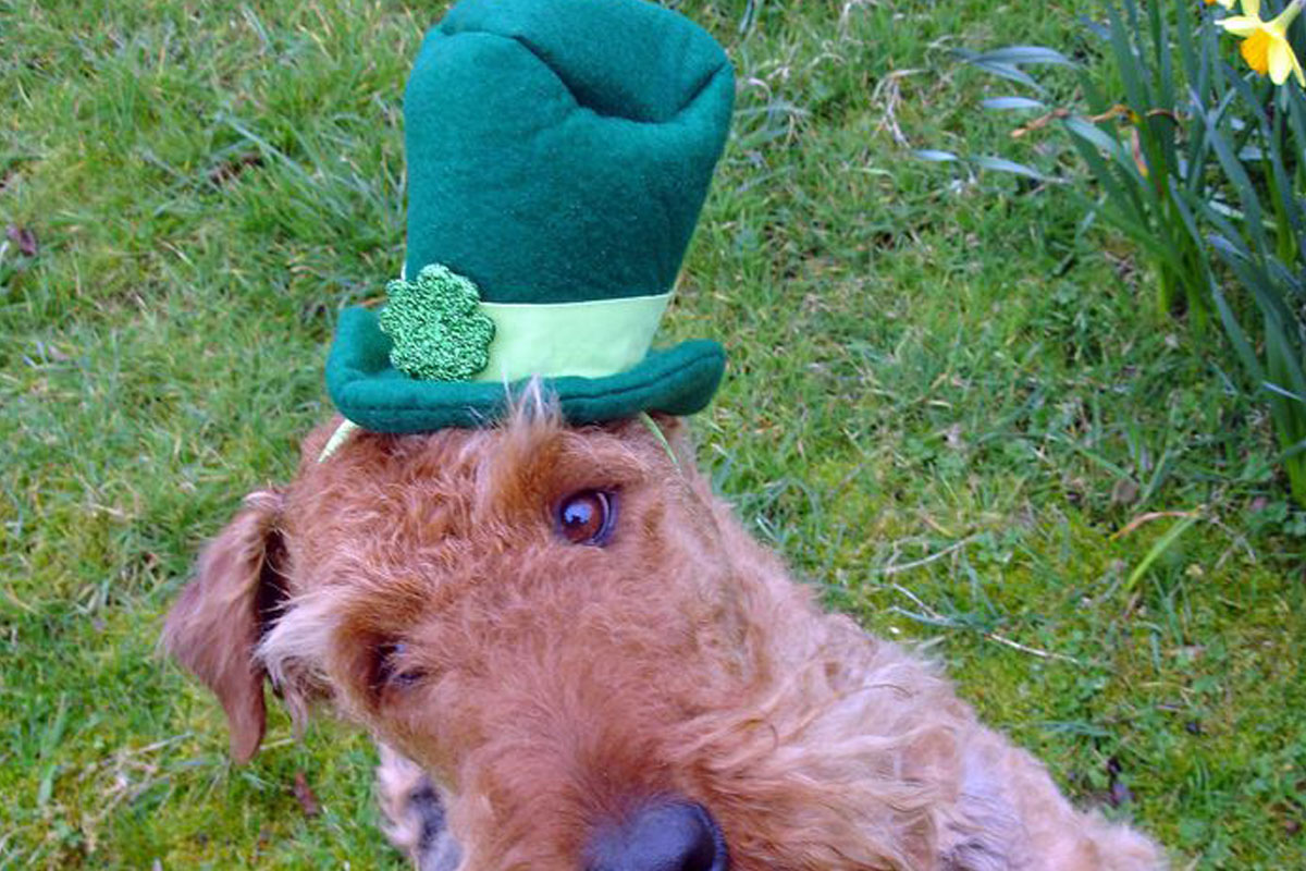 tall green hat dog st patricks day