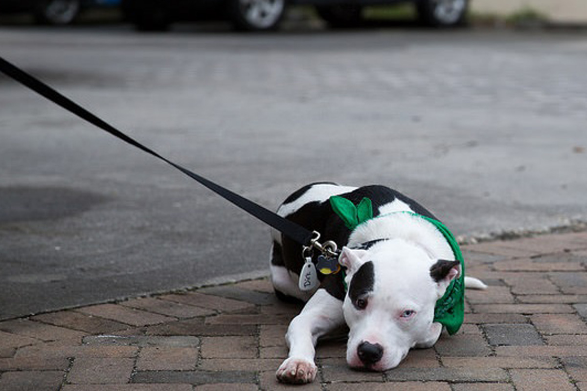 tired dog st patricks day