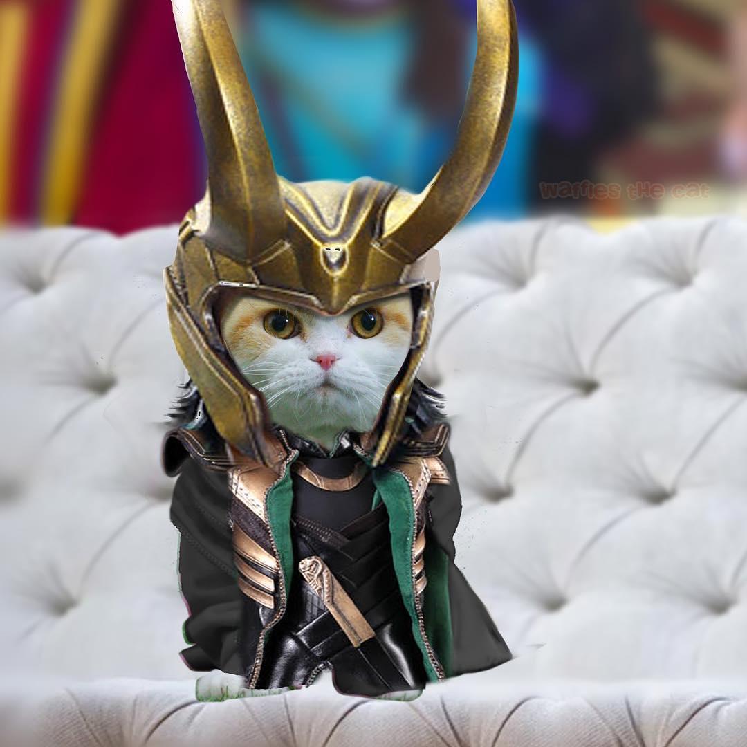 loki cat marvel pet costume