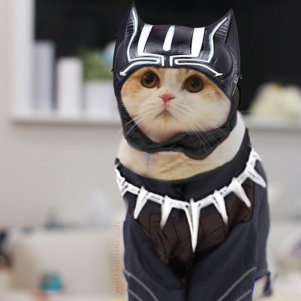 black panther cat marvel pet costume