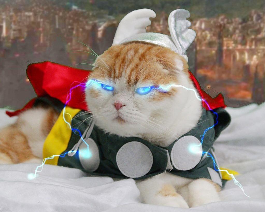 thor cat marvel pet costume