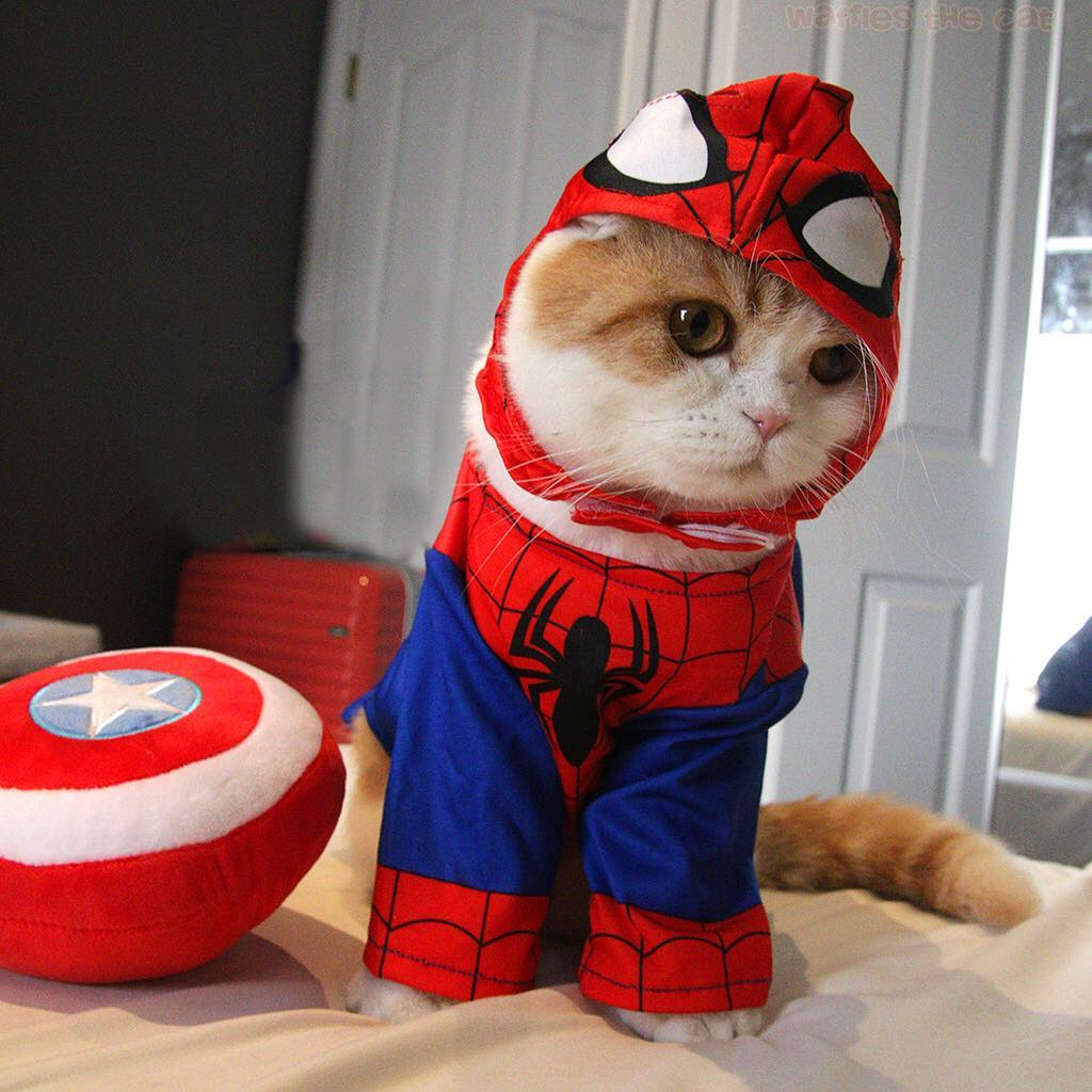 spiderman cat marvel pet costume