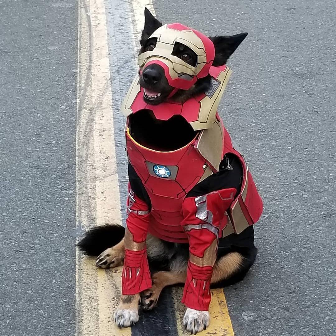iron man dog marvel pet costume