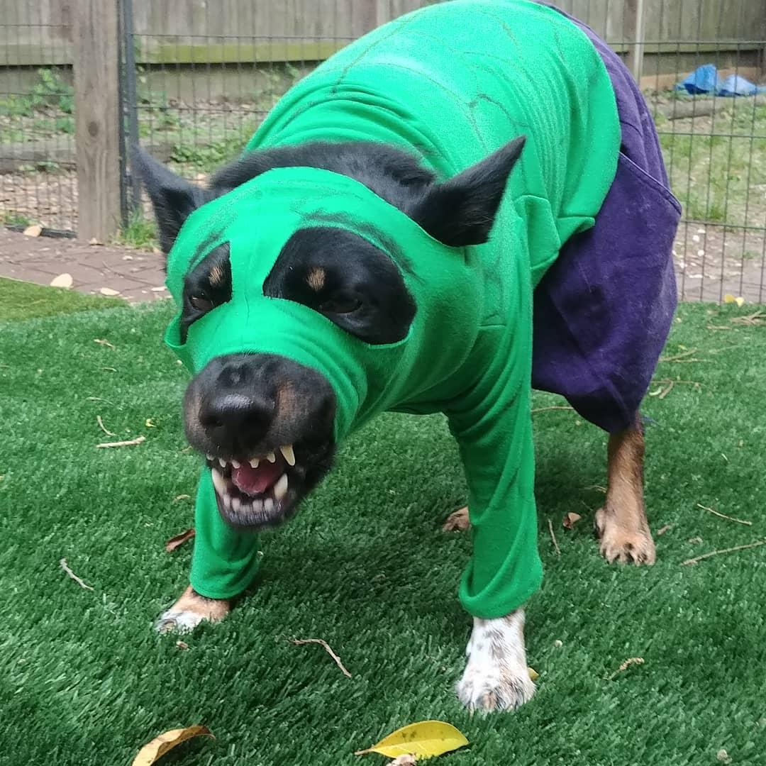 hulk dog marvel pet costume