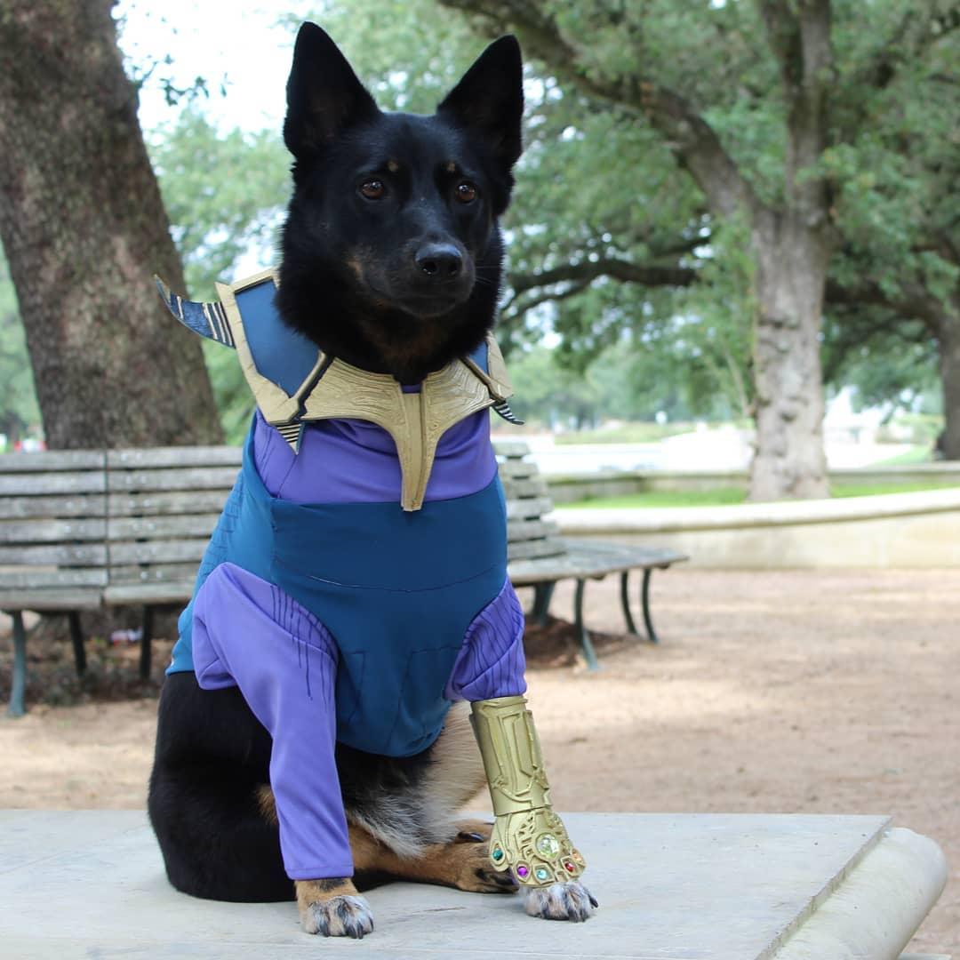 thanos dog marvel pet costume