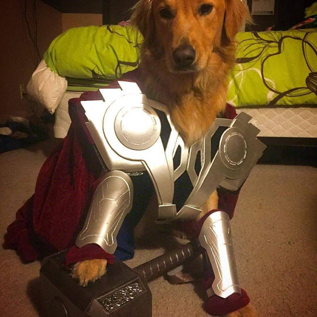 thor dog marvel pet costume 2