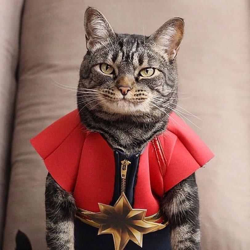 doctor strange cat marvel pet costume