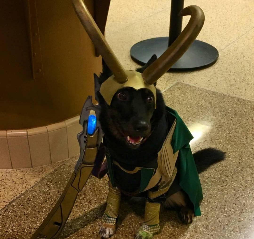 loki dog marvel pet costume
