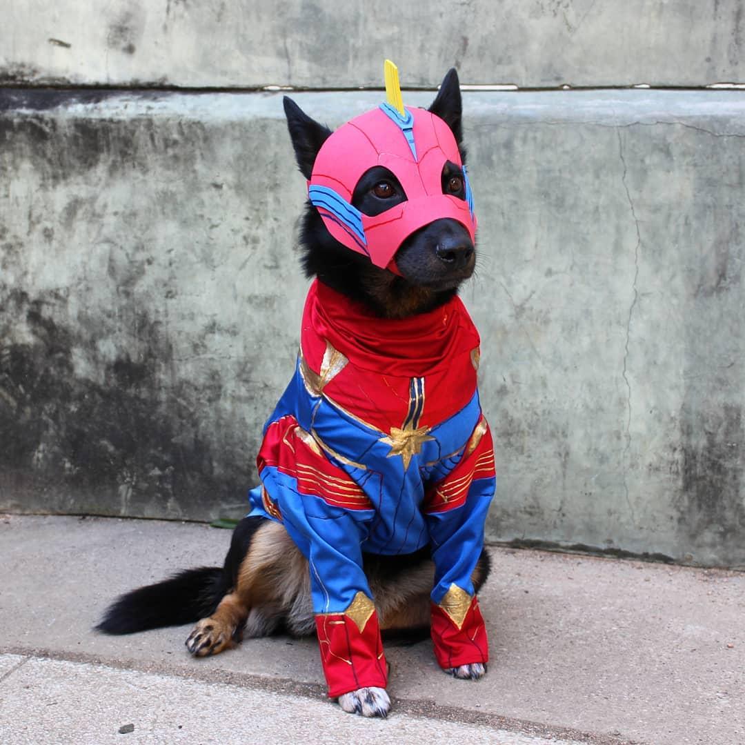 captain marvel dog marvel pet costume