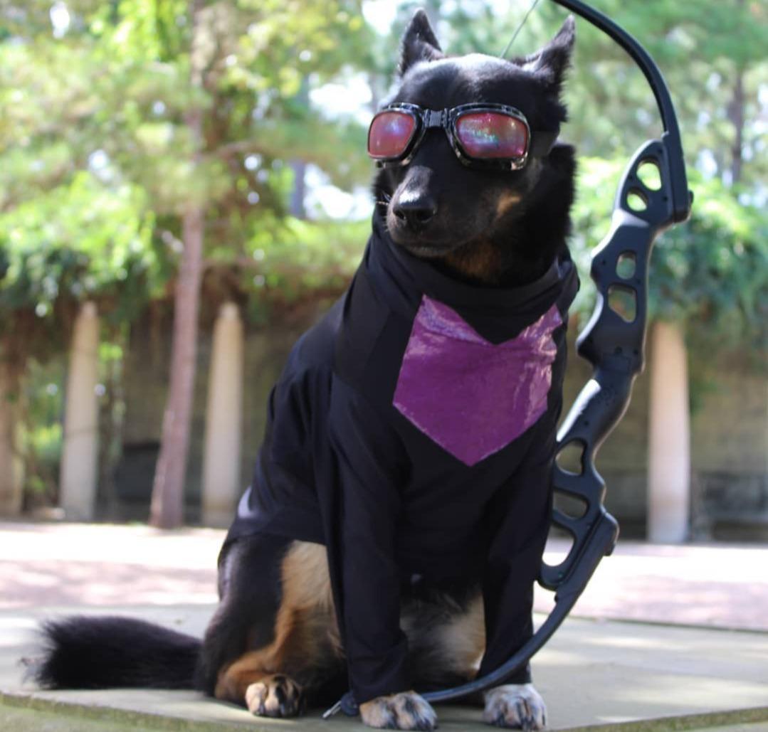 hawkeye dog marvel pet costume