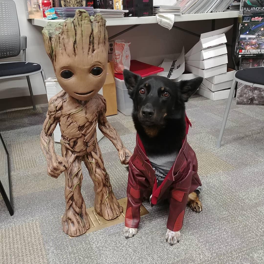 starlord dog marvel pet costume