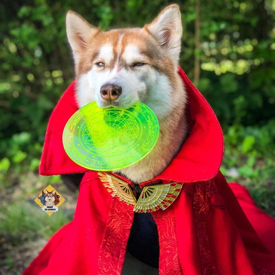 doctor strange dog marvel pet costume