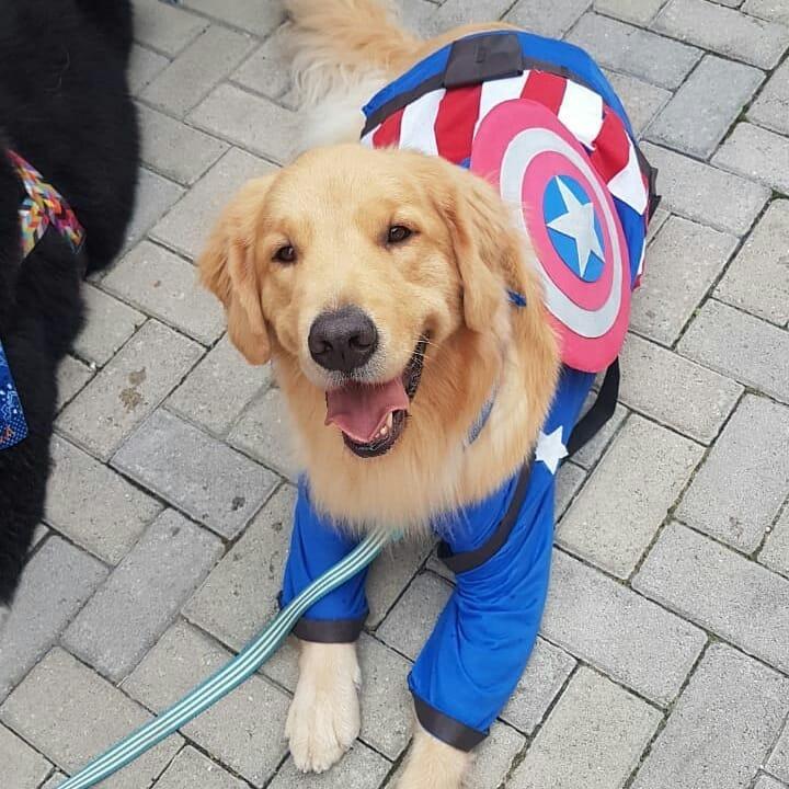 captain america dog marvel pet costume