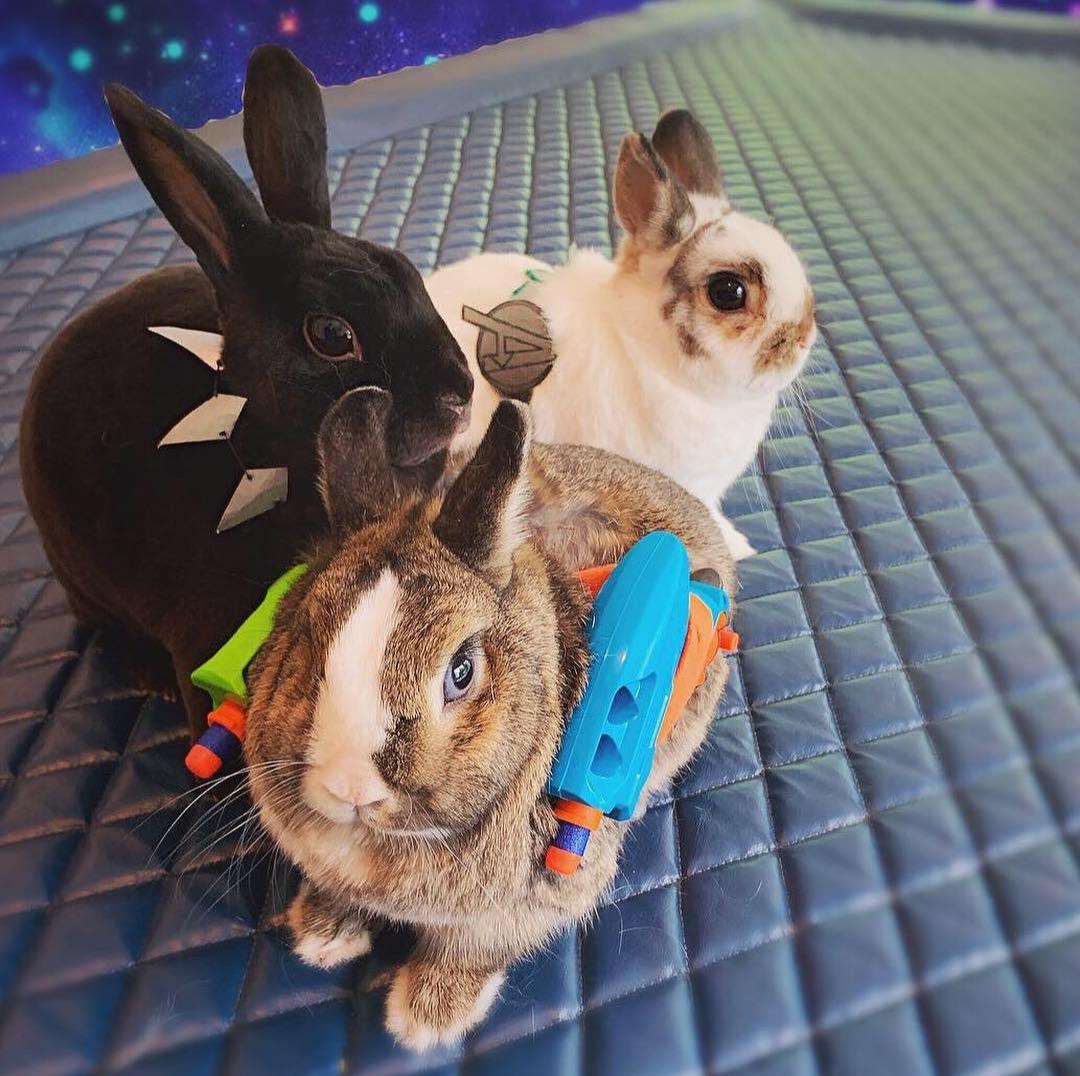 rabbit marvel pet costume black panther rocket