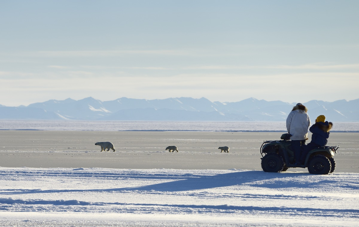 Visitors on an all terrain vehicle watching polar bear sow and cubs