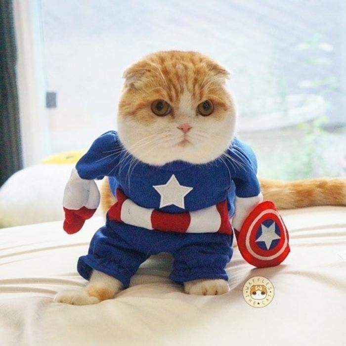 captain america cat marvel pet costume