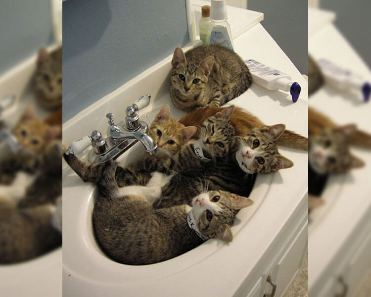 cats-in-sink-54376-41948