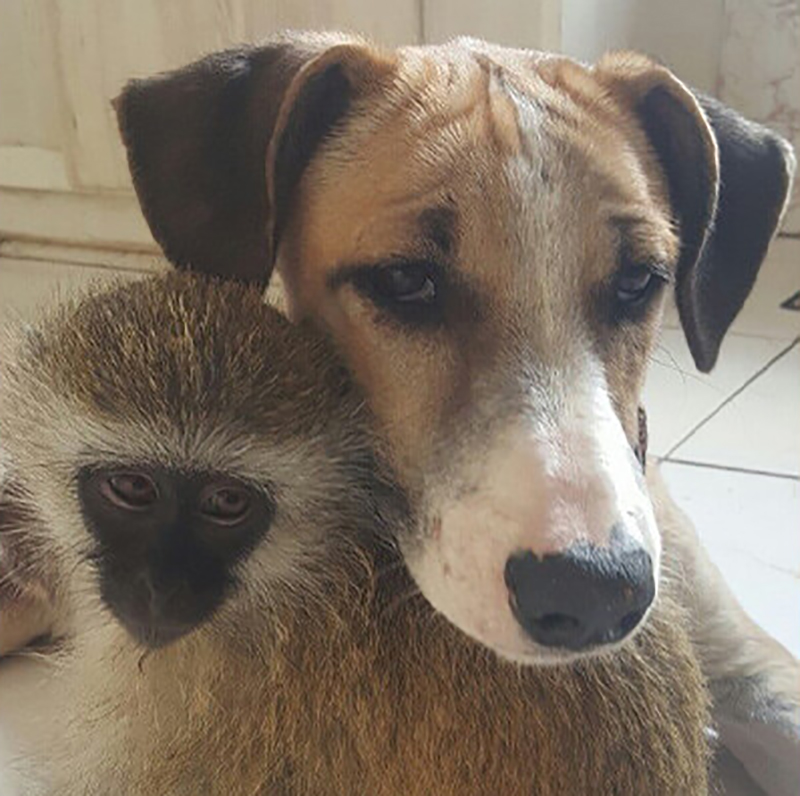 15-orphaned-baby-monkey-makes-unlikely-friends-horace-11789-15781-53160