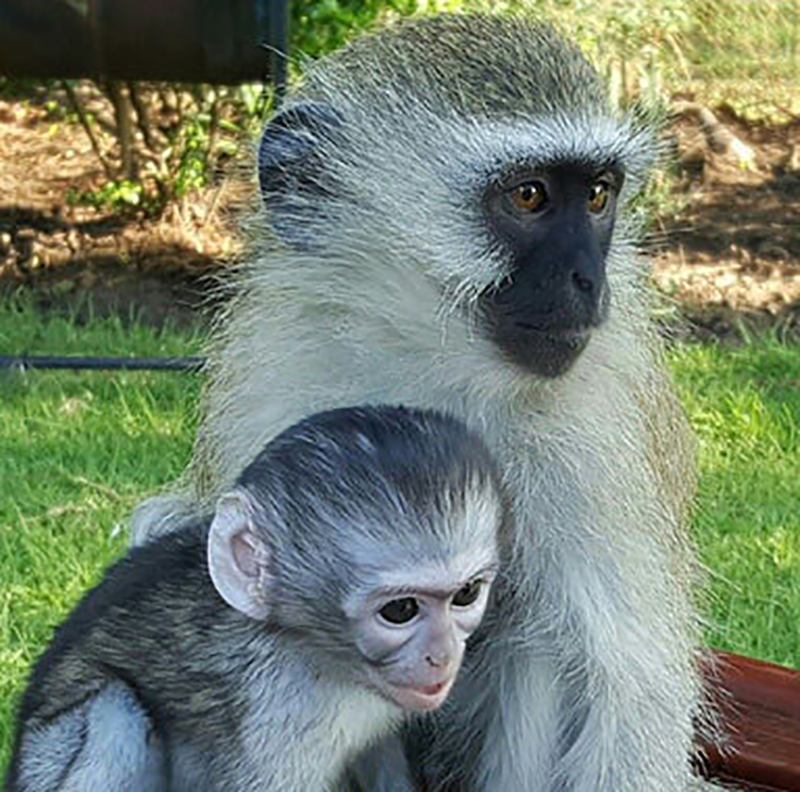19-orphaned-baby-monkey-makes-unlikely-friends-horace-17819-11494-44753