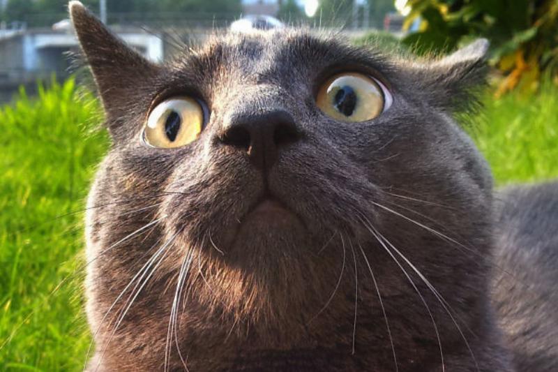 dramatic cat receives bad news