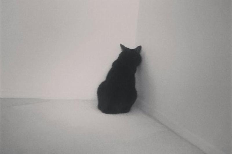 dramatic cat in corner
