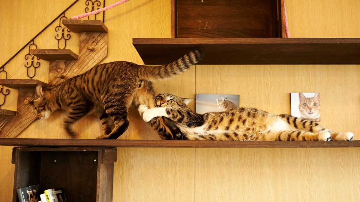 dramatic cat hanging onto another cat