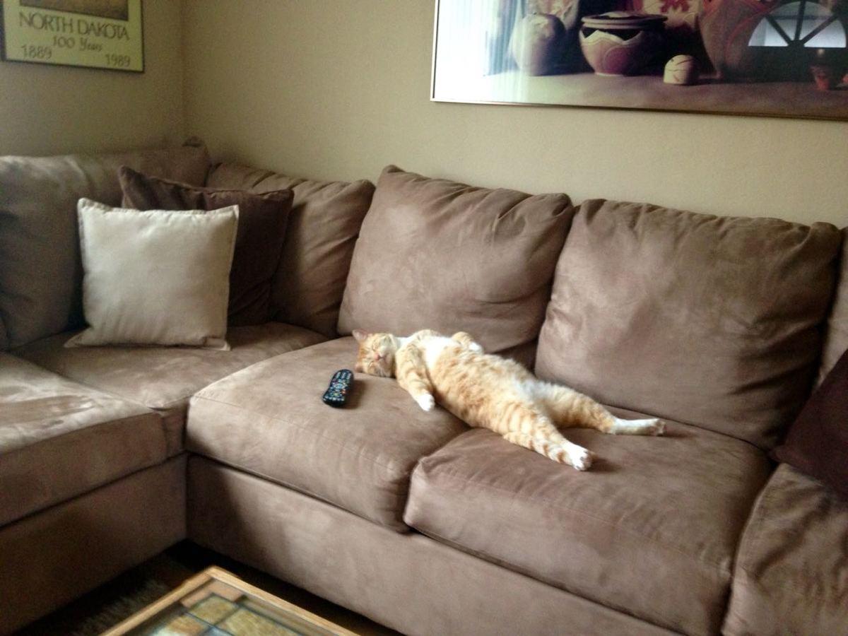 dramatic lazy cat