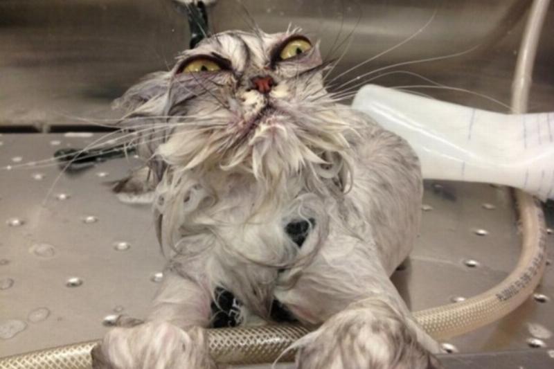 dramatic cat bath