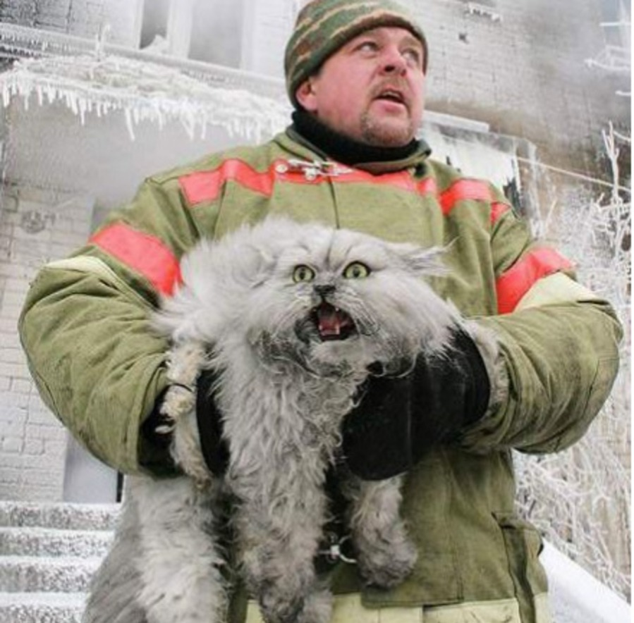 dramatic cat saved from fire