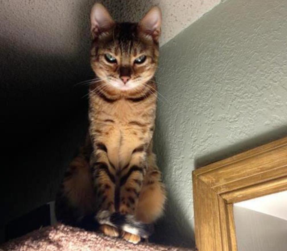 dramatic cat death stare
