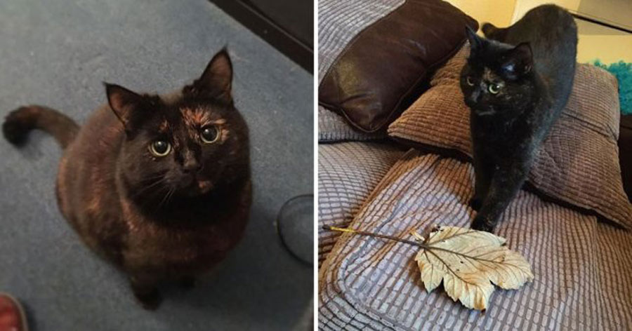 baloo the cat brings her owner a leaf every day