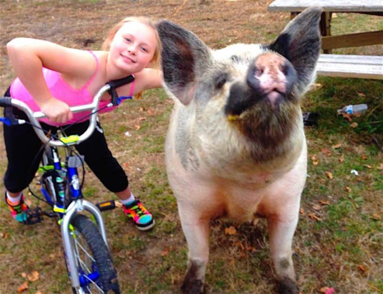 girl on bike and pig