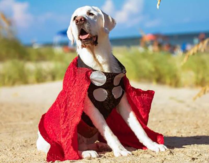 cosplay-dog-1