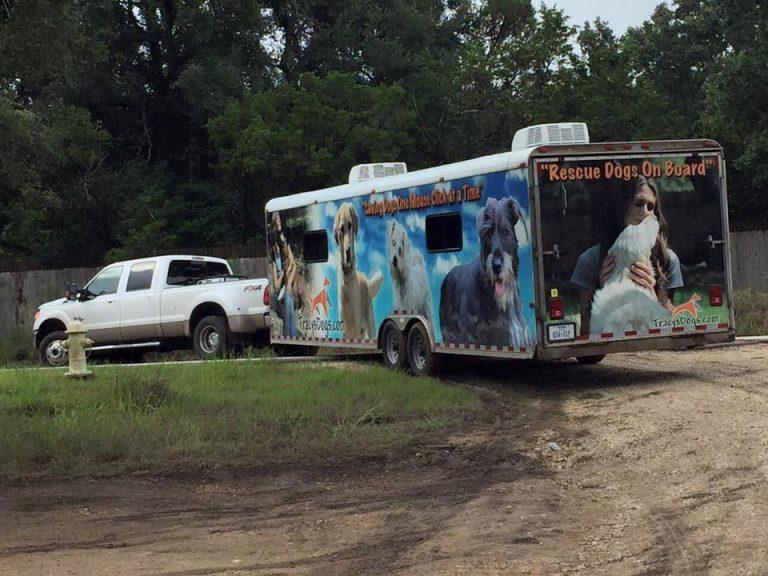adoption truck trailer
