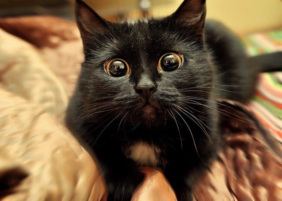 dramatic cat eyes