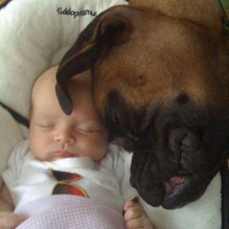 dog-baby-14-66128