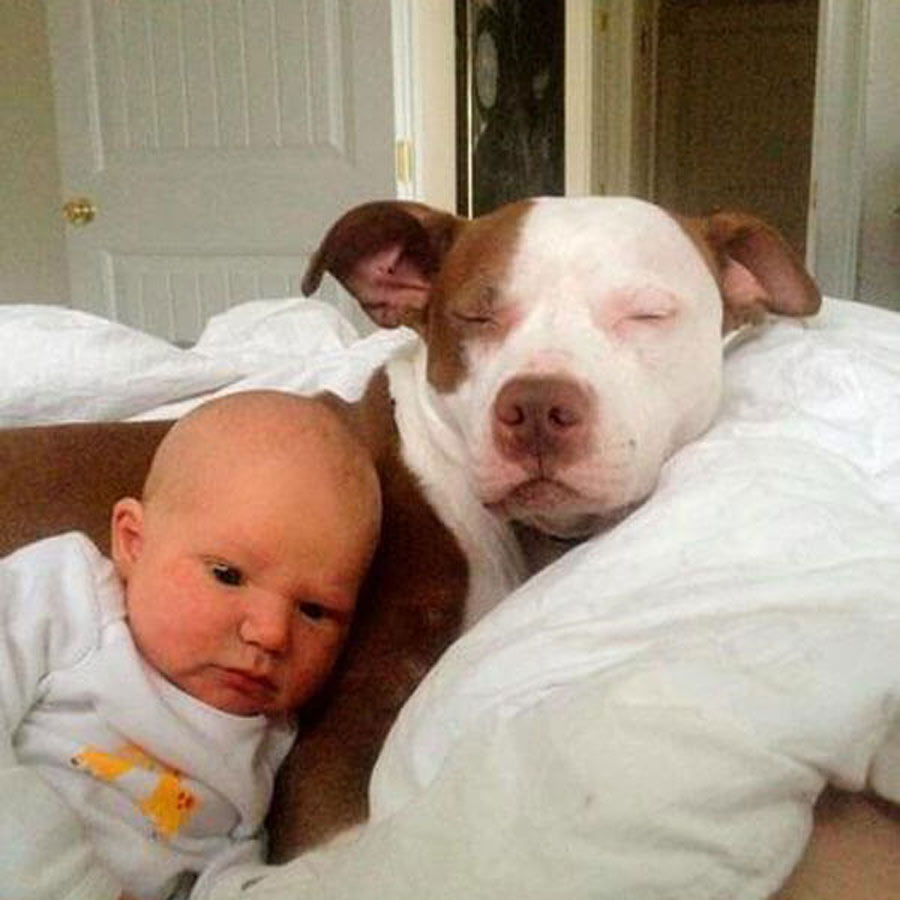 dog-baby-17-82748