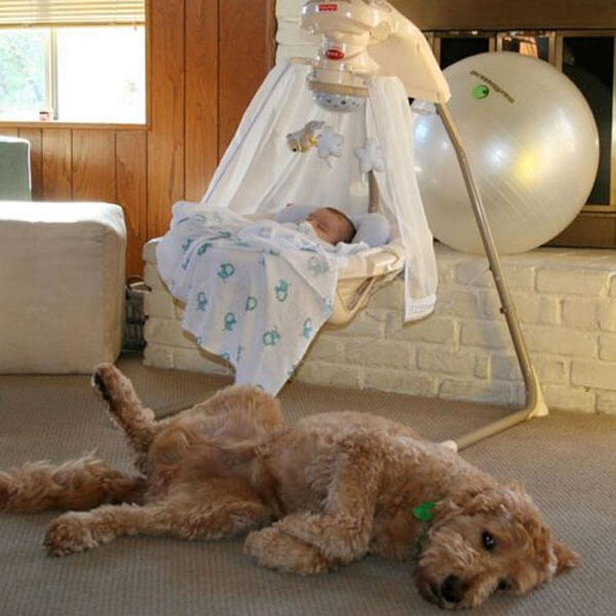 dog-baby-2-10138