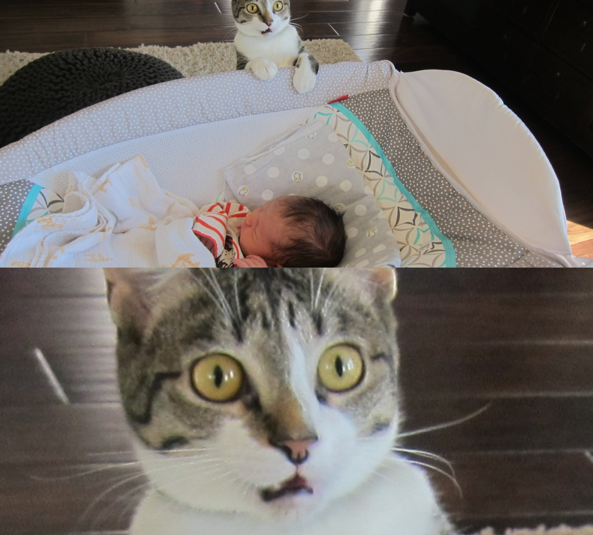 dramatic cat meets baby