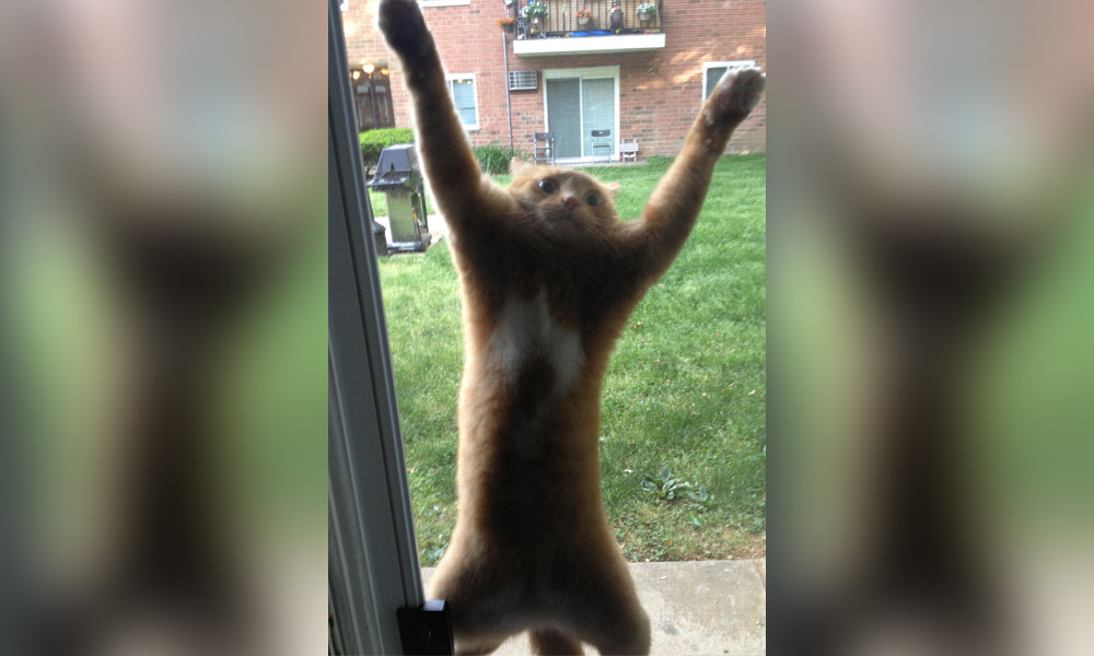 dramatic cat stuck on screen door