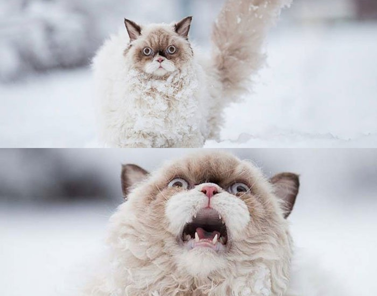 dramatic cat in the snow