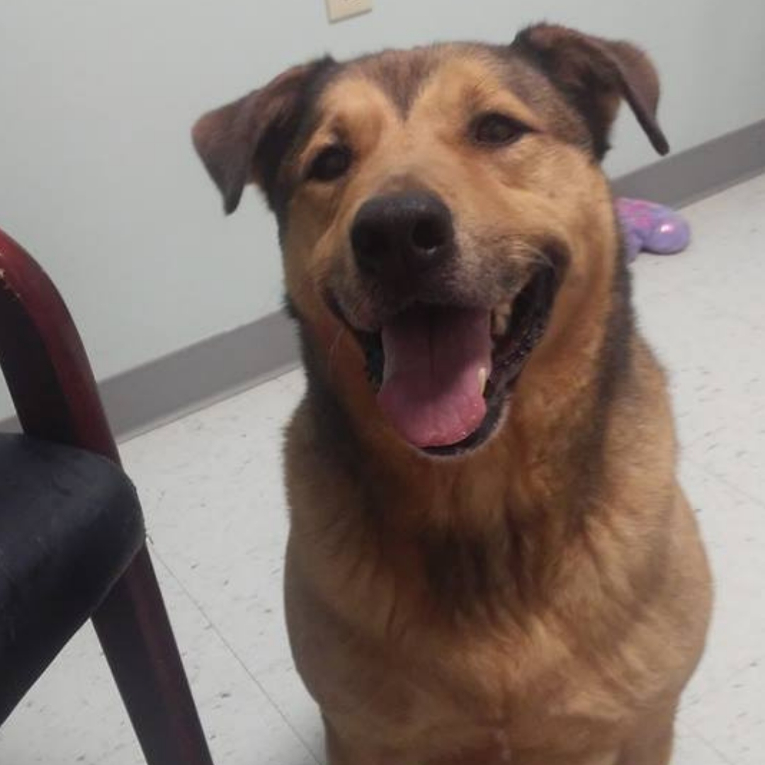 higgins the dog in shelter preble county